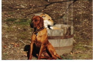 Joe & Shiloh in a barrel